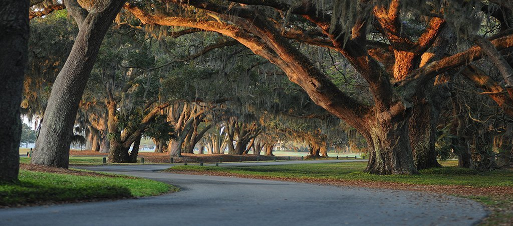 picture of oak trees and a road