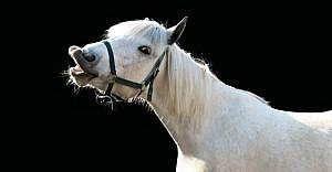 """A policy can help nonprofits look """"gift horses"""" in the mouth"""