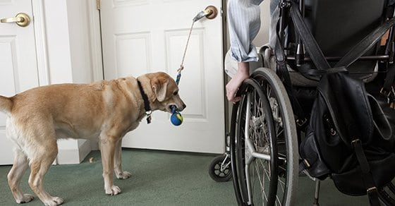 Responding to an employee's request for a service dog